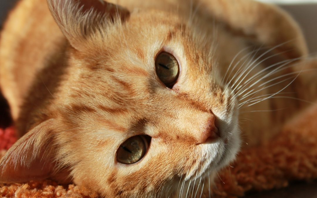 National Moving Month: How to Help Your Pet Deal with Homesickness