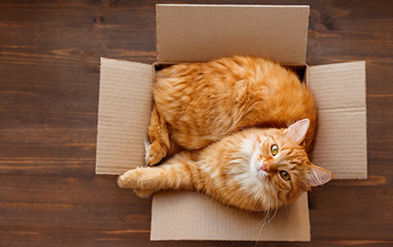 Sizing A Carrier For Your Pet