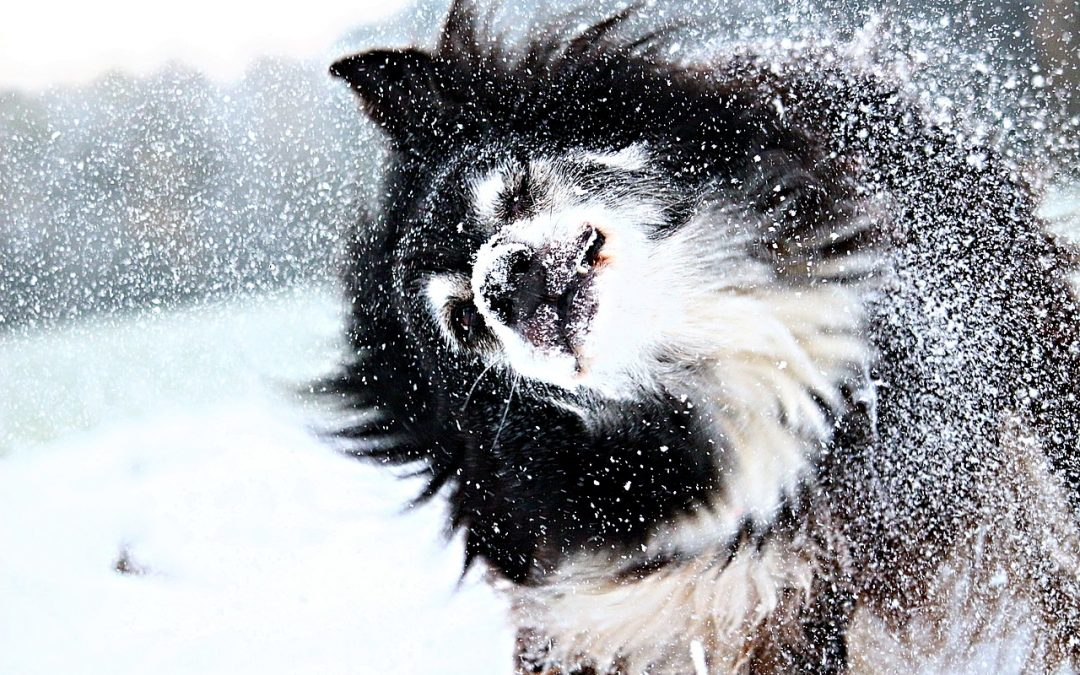 Winter Travel: How To Keep Your Pets Warm