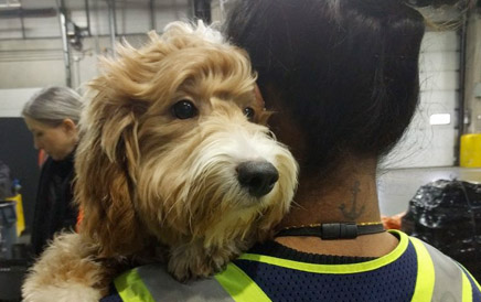 Pets On A Plane: The Problem With Smuggling Animals Onboard