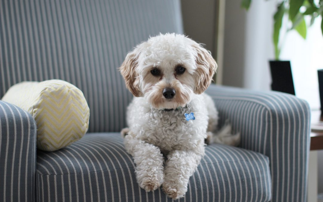 5 Tips for Selling a Home With Dogs