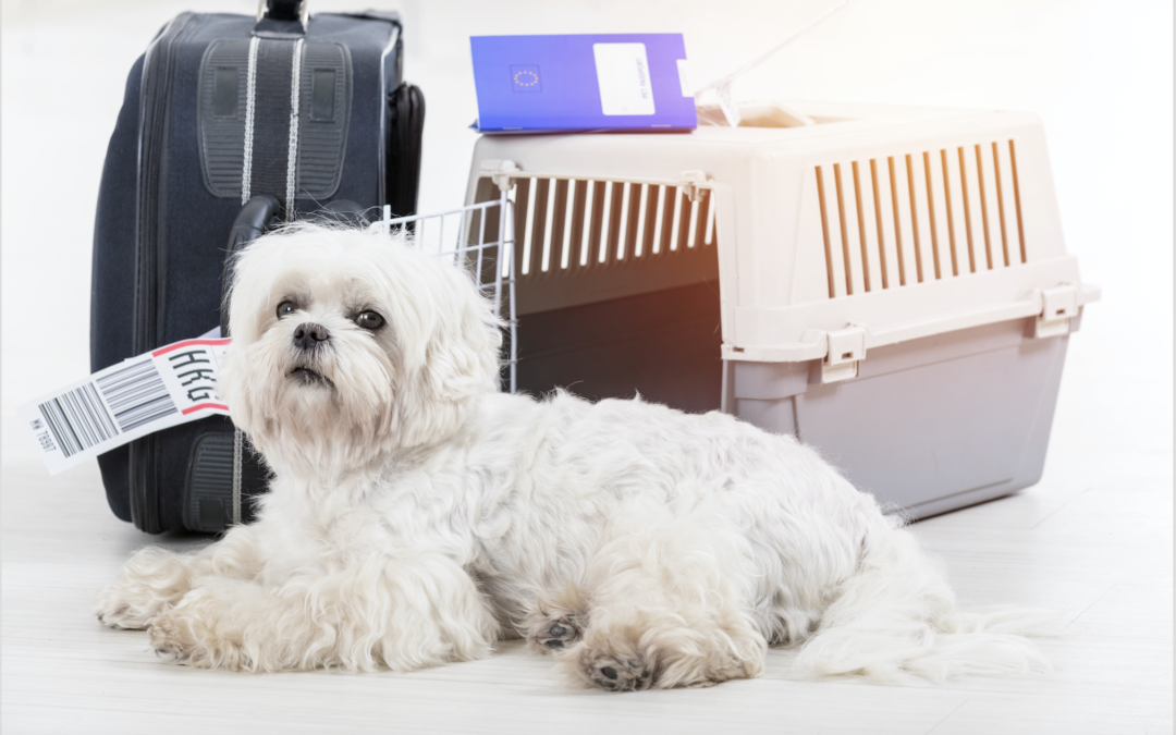 Comforting Your Pet During Travel