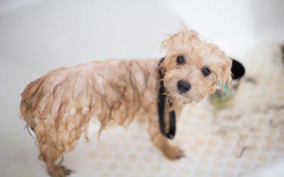How Often Should You Bathe Your Pet?