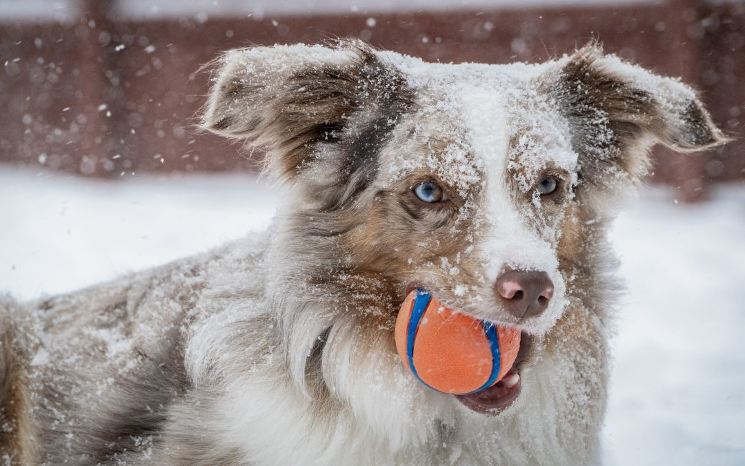 Exercising Your Dog Through the Colder Months