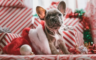 Why You Shouldn't Buy Animals as Presents