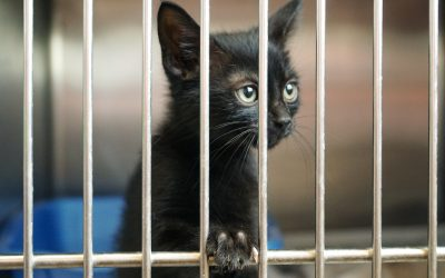 Love Animals? Adopt One to Be Your Valentine!