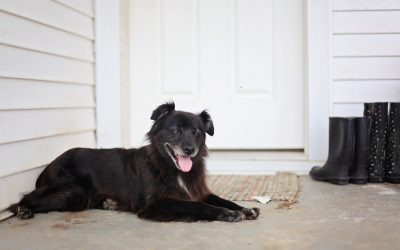 How Do Companion Animals Fit Into Your Household?