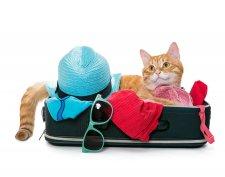 pet travel, animal travel, canada