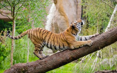 Why You Shouldn't Keep Exotic Animals As Pets