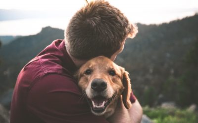 The Health Benefits of Having a Furry Companion