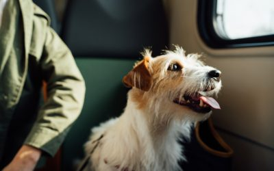 Travelling with a Pet During COVID-19? Here's What You Should Know